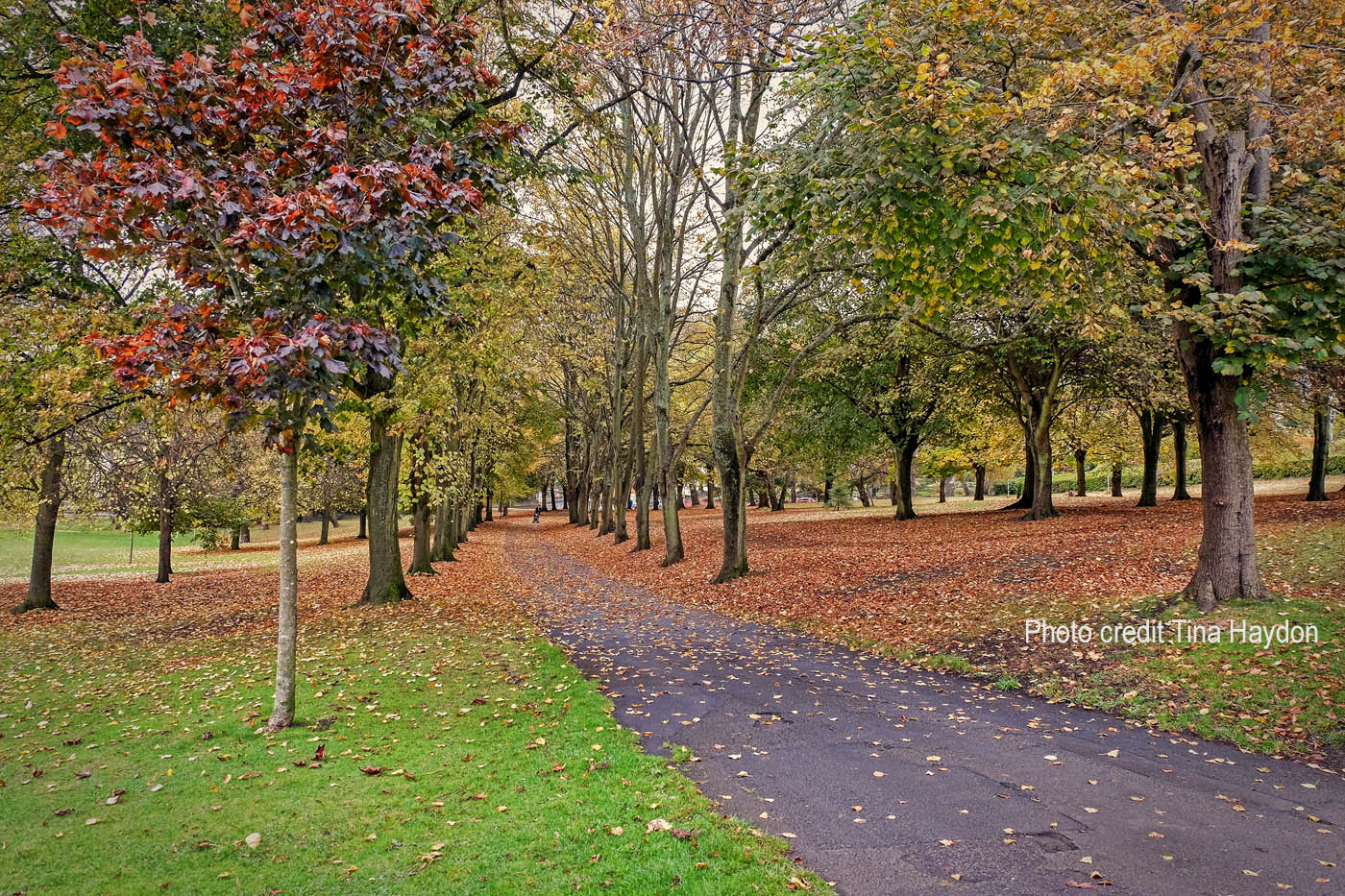 Romilly Park