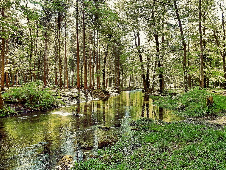 Teich im Wald umgeben von Bäumen