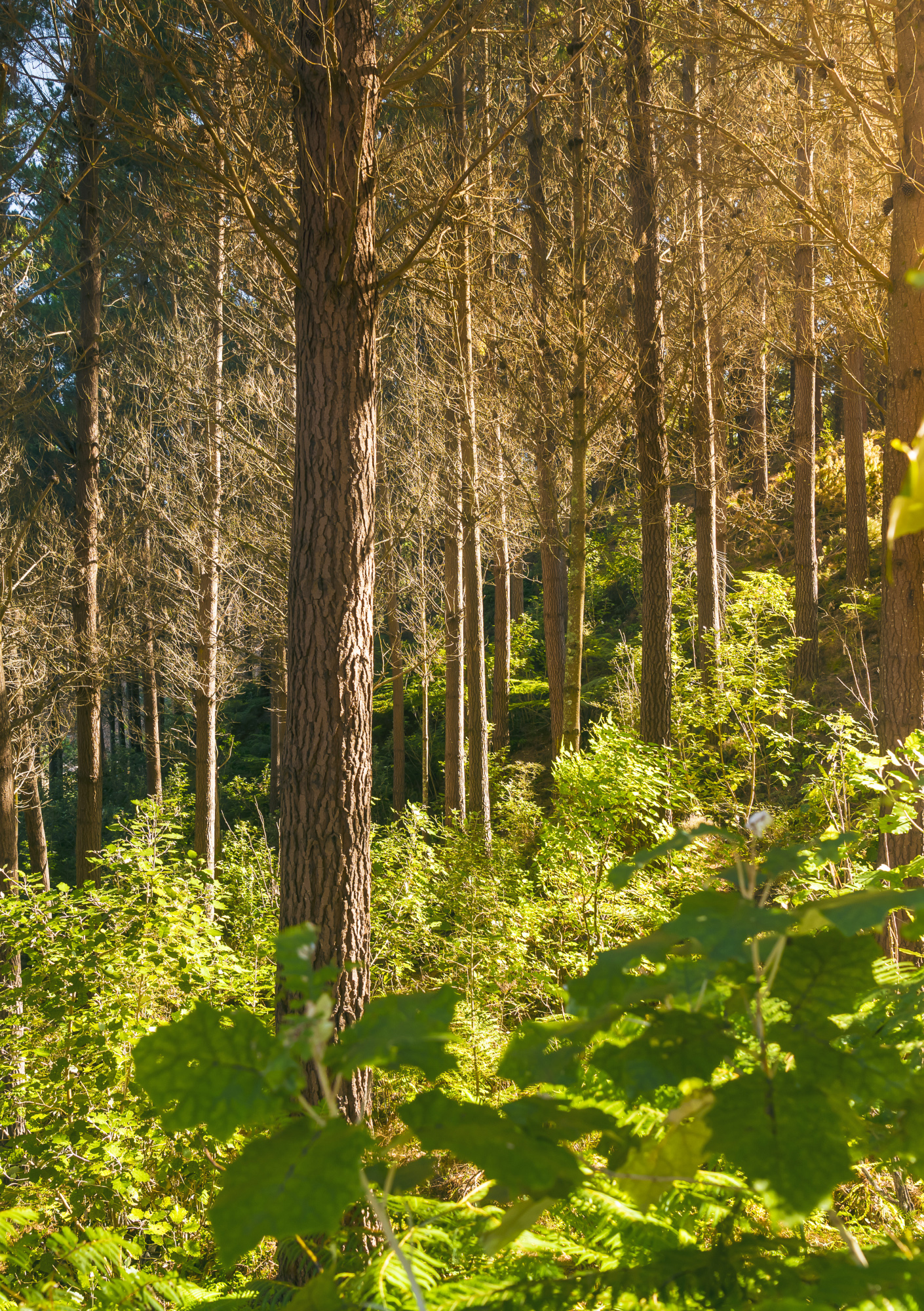 Investing in forestry