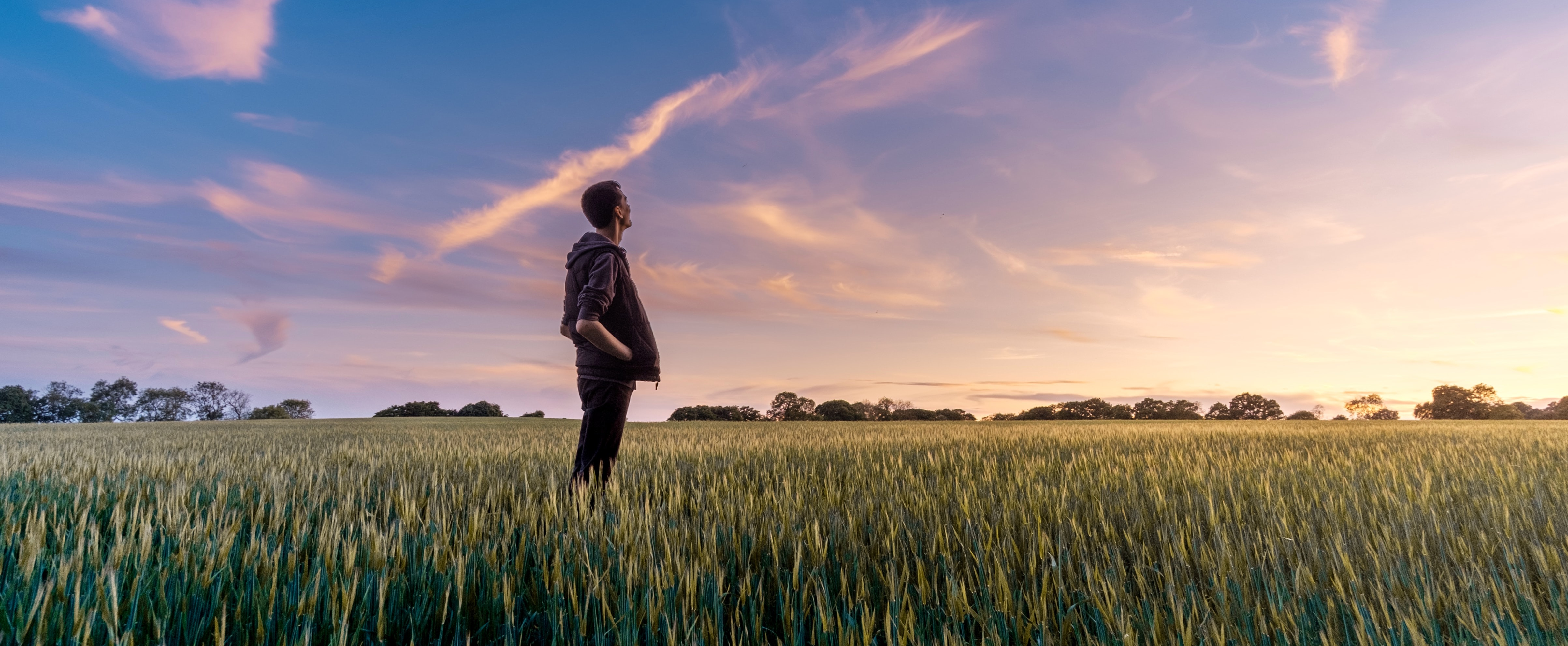 A horticultural scene - a man  standing in a field of wheat watching the sunset