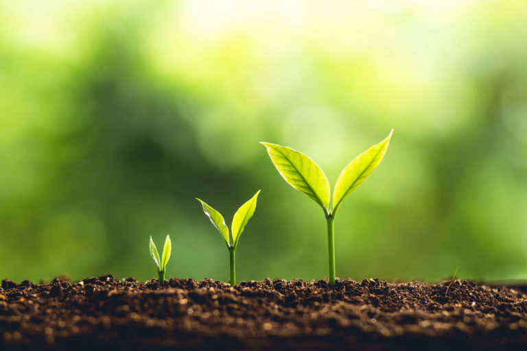 Sowing the seeds – Australia's seed stage gap