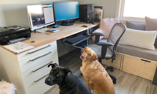 Dispatches from Centercode's #Remote Offices