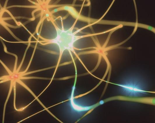 Illustration of neurons.