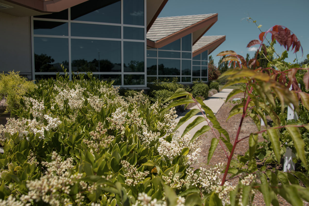 Sustainable landscape services - water conservation - reduced energy costs