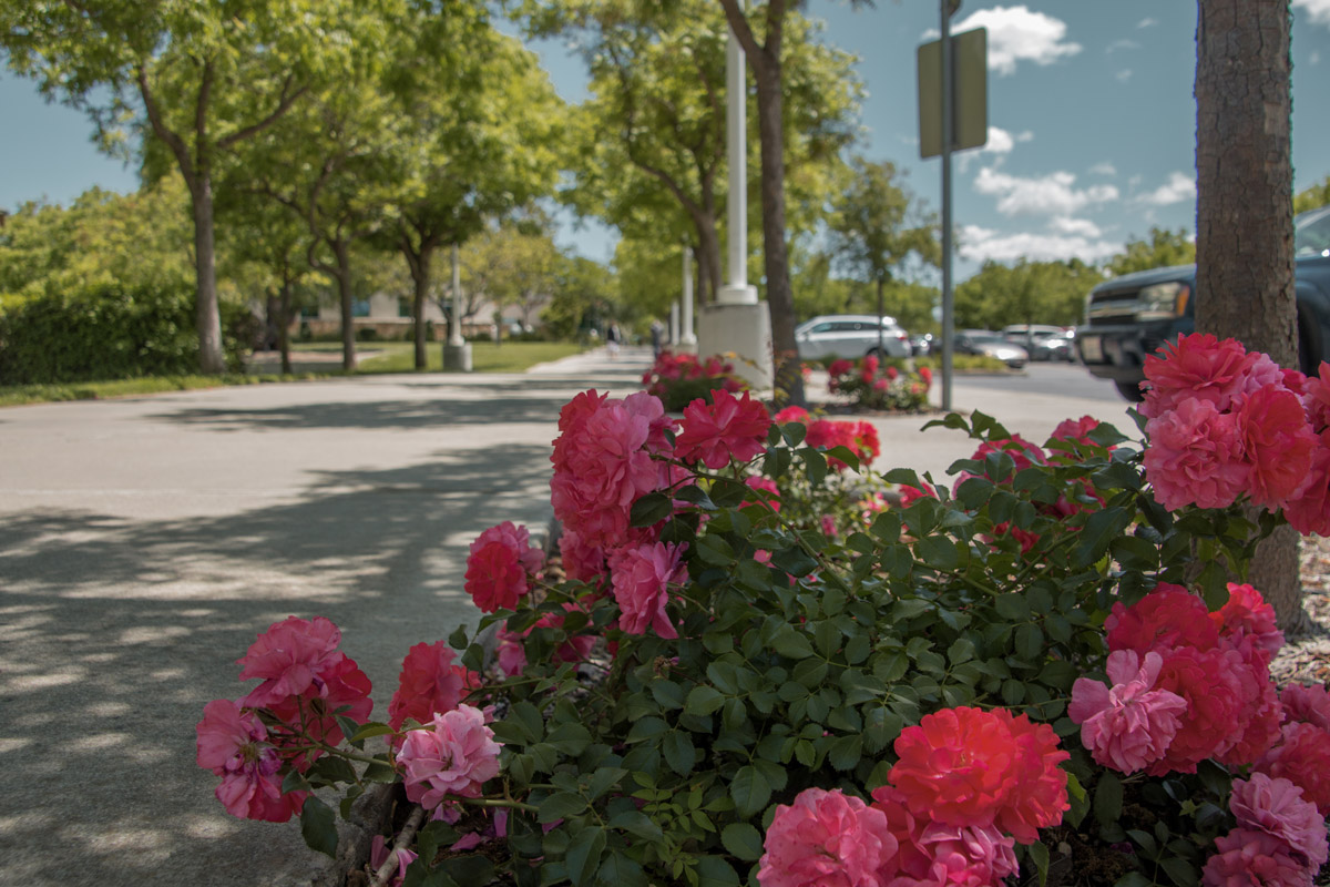 Retail - shopping property commercial landscaping