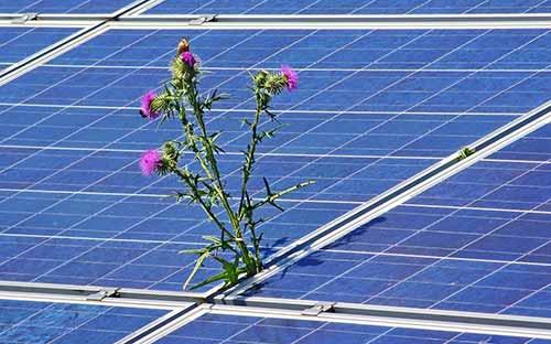 La végétation sur des panneaux solaires provoque une baisse de rendement