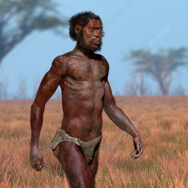 Homo Sapiens Evolve