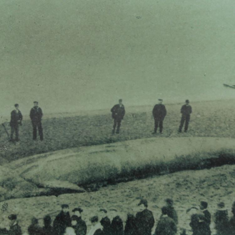 Boscombe Whale