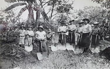 Costa Rican Coffee Trade