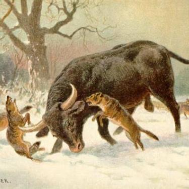 The Last Aurochs