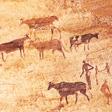 Domestication of cattle