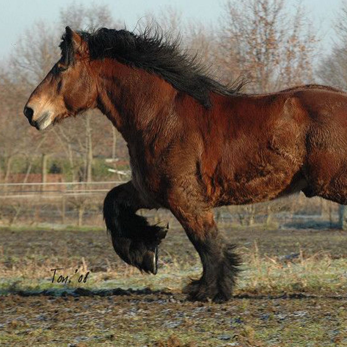 Horses replace Oxen in Europe