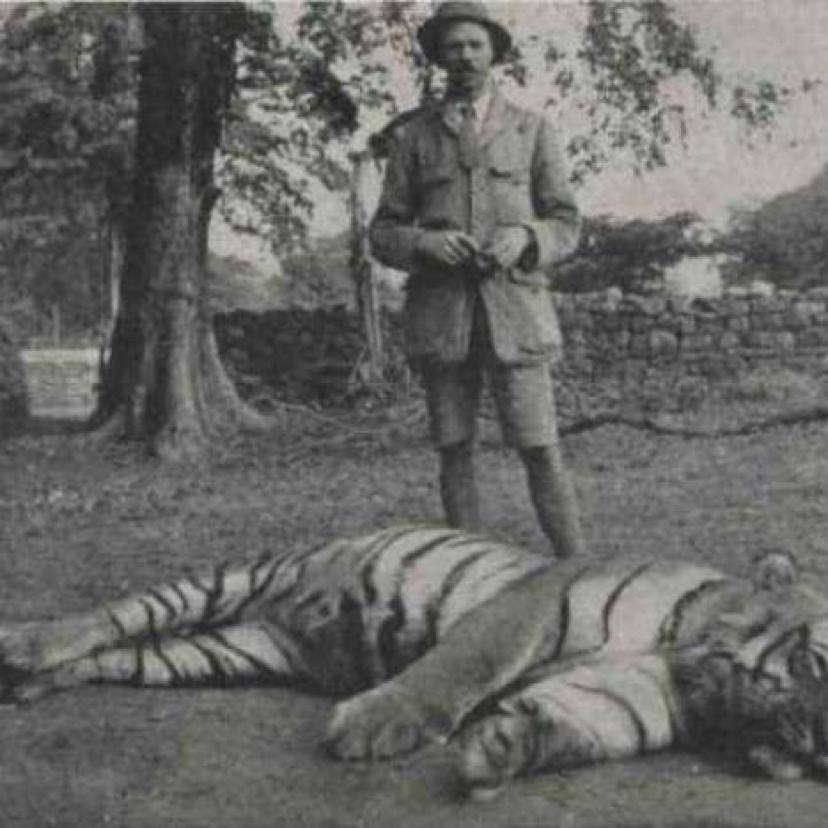 Champawat Tigress