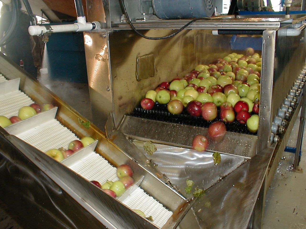 """2. After the apples soaked, they are scrubbed and rinsed in fresh water. After this sanitation process is complete, the apples ride up a conveyor belt to the """"Hammer Mill"""" where they are chopped into small pieces."""