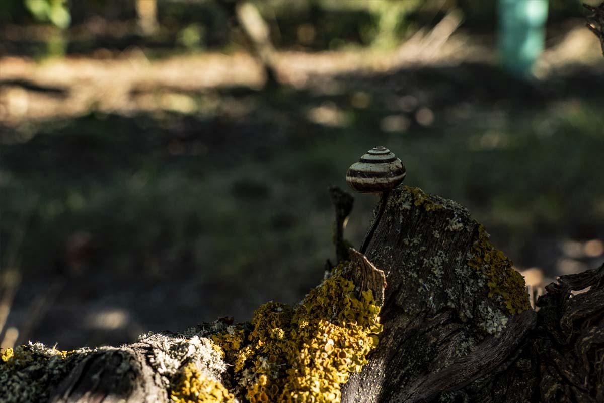 Nature aux pieds des vignes, Domaine du Vieux Pressoir