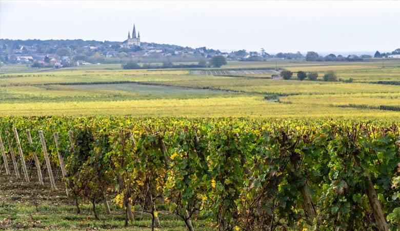 Gite à Saumur proche des Vignes