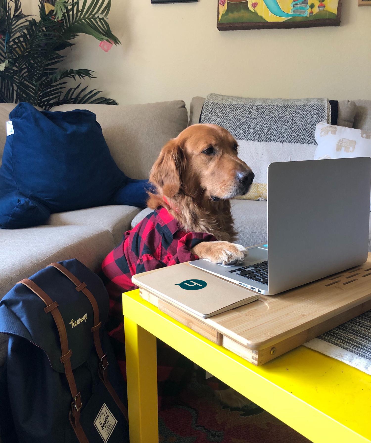 Employee dog at computer