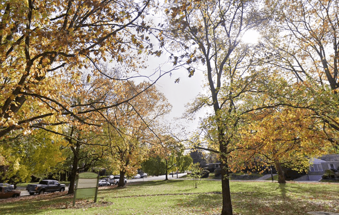 Trees surrounding Lyndhurst Green