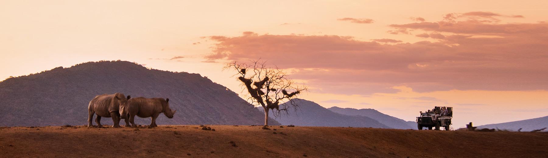 Travellers on a safari game drive spotting two rhino