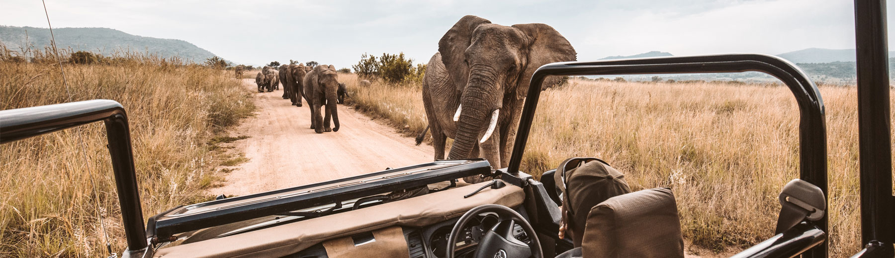 A close encounter with elephant on a game drive in Botswana