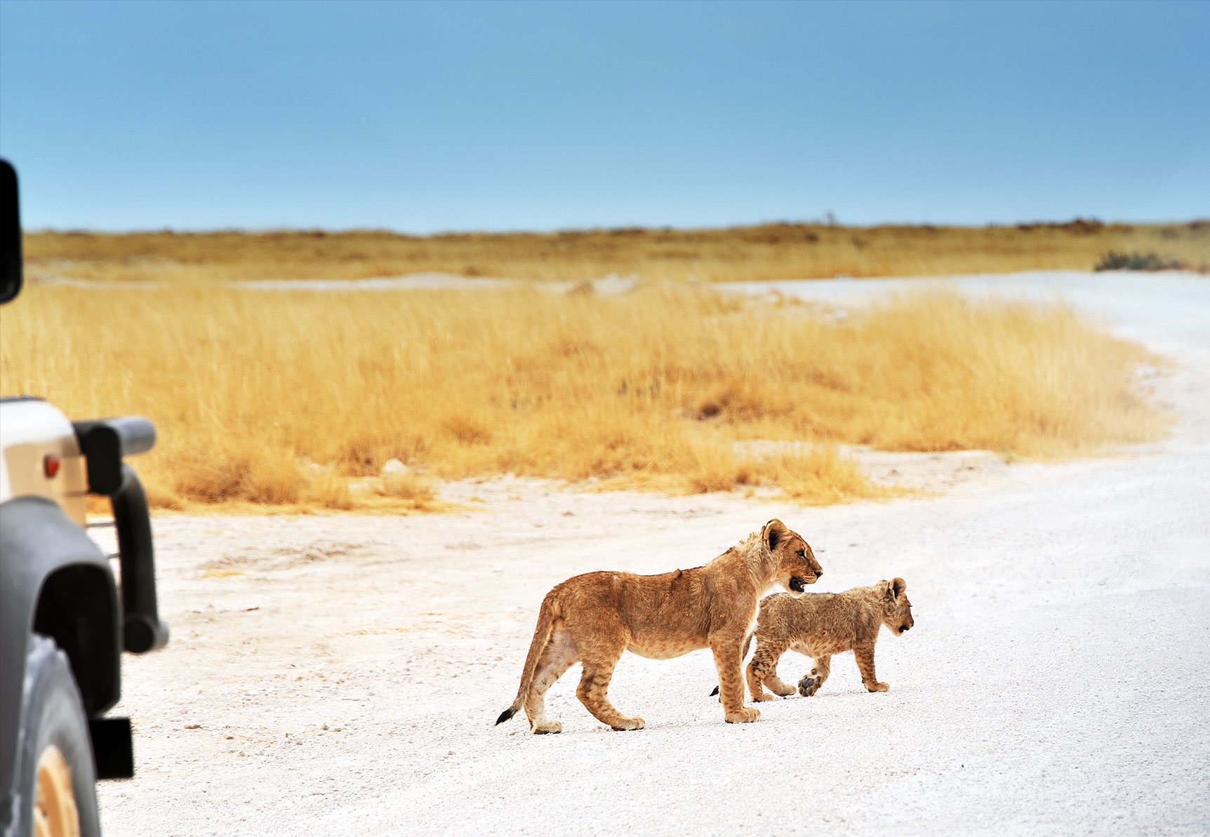 Top 10 Things To Do in Namibia inline image 5f96819971131