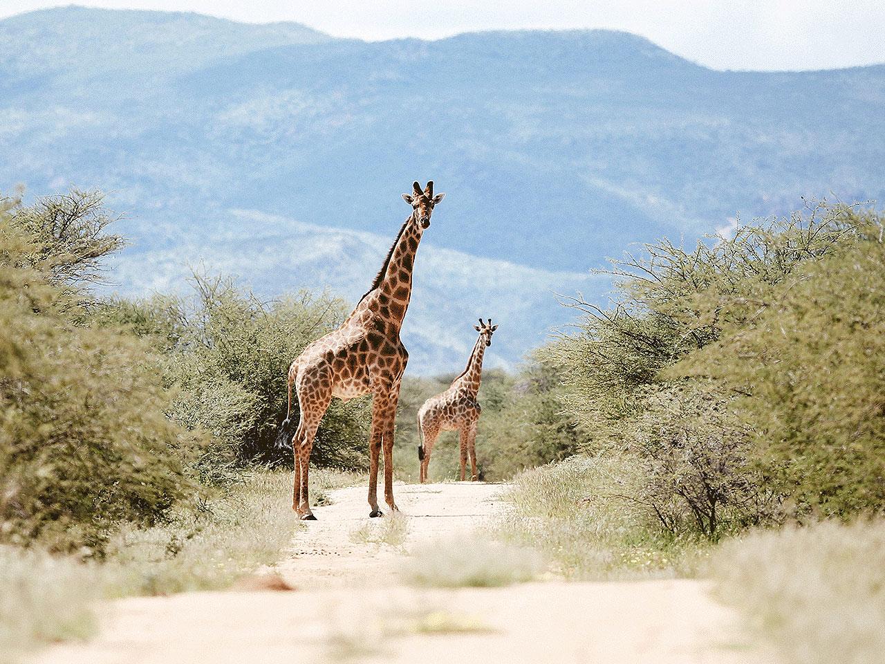 Central Namibia inline image 5e425e61af4e9