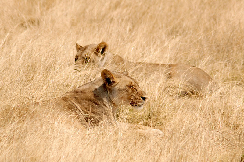 When is the Best Time to Visit to Namibia? inline image 5bfbee1c79c13