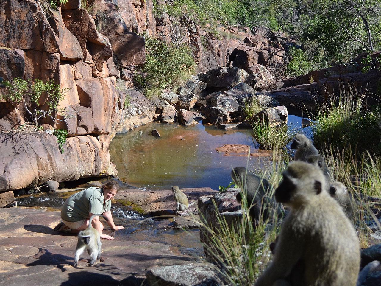 Limpopo inline image 5e43b90e3b5cd