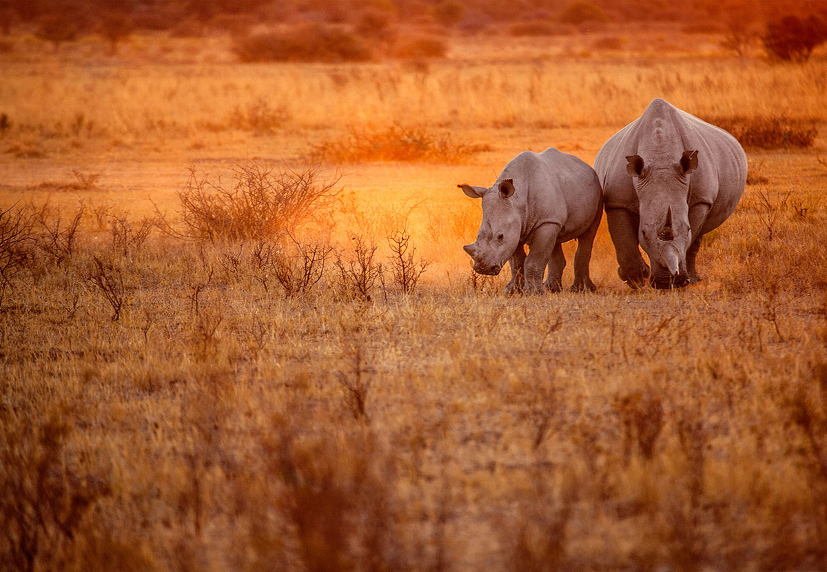 The 10 Best Places to Visit in Namibia inline image 601c322c29a79