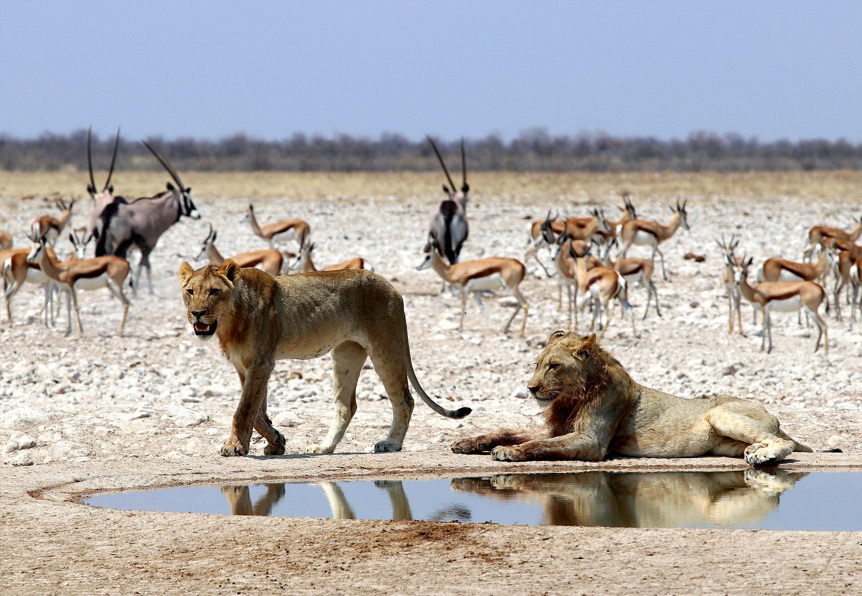 Etosha National Park inline image 5cb5988c32b86