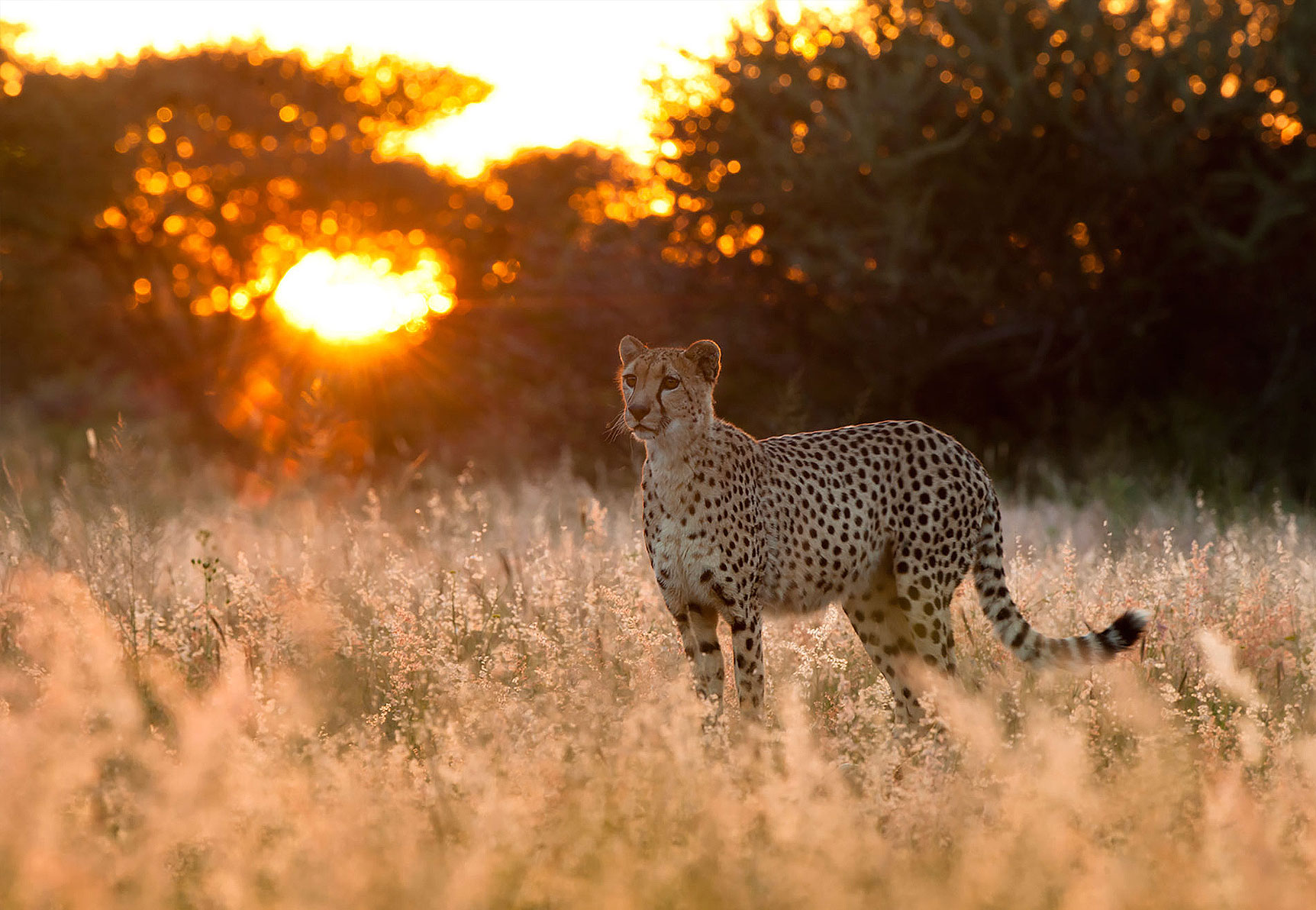 Best Time For... Game Viewing inline image 5ddcf642c5ad0