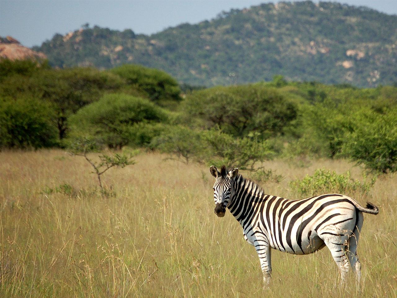 Limpopo inline image 5e43b9b4dd7ec