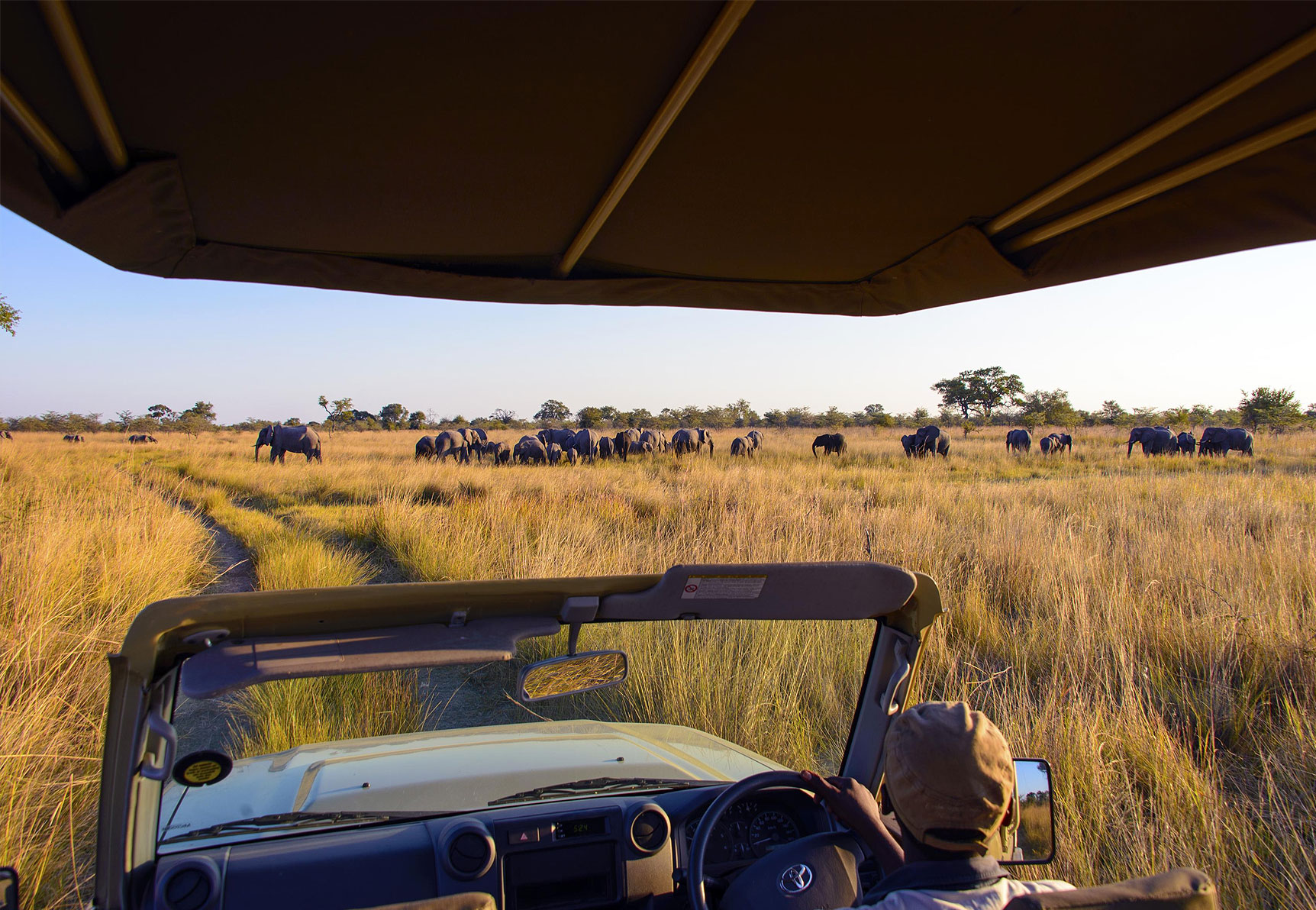 Best Time For... Game Viewing inline image 5ddcf60db03fe