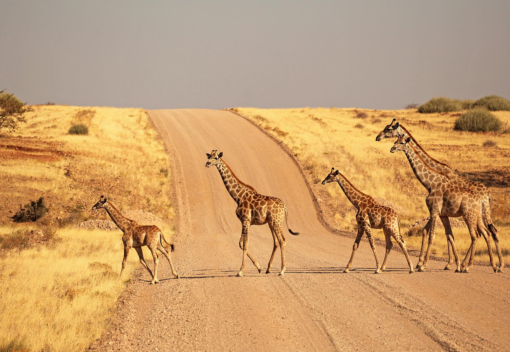 Self-drive Tours Namibia inline image 5bf2b36658916