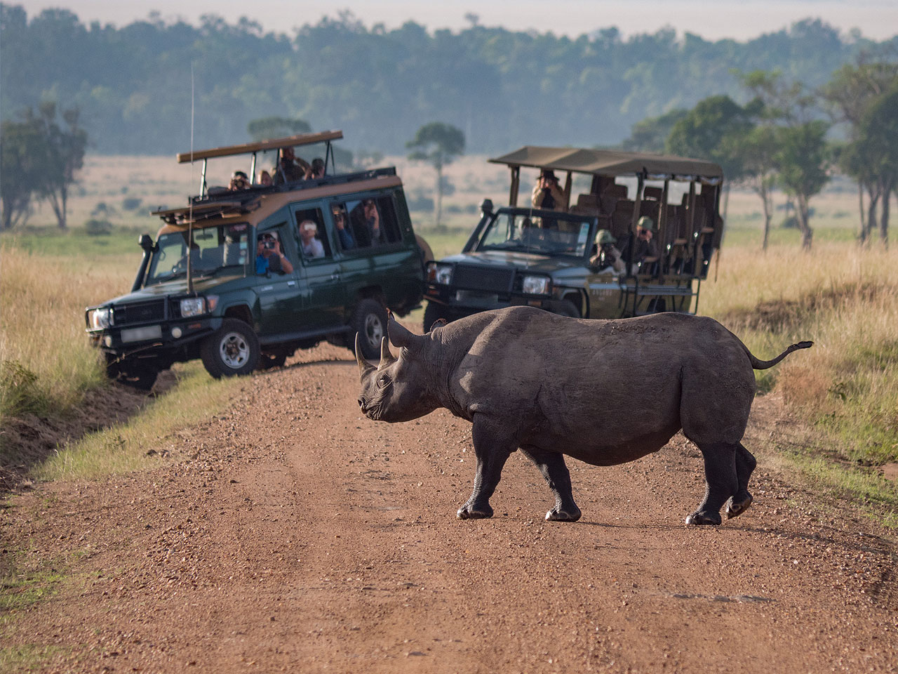 Two open safari vehicles of tourists on a game drive watching as a rhino crosses the gravel road in front of them.