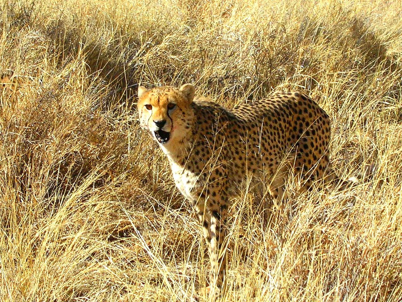 Central Namibia inline image 5e425ea8419d2