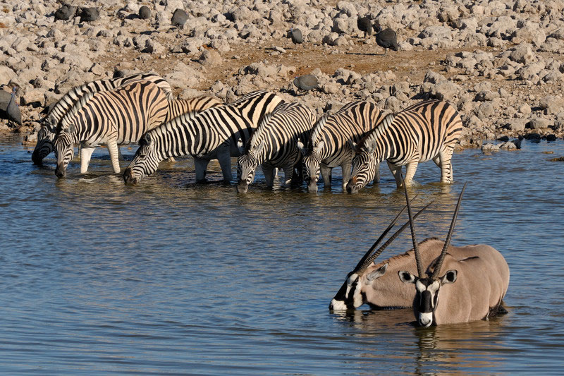 When is the Best Time to Visit to Namibia? inline image 5bfbee1c7b38c