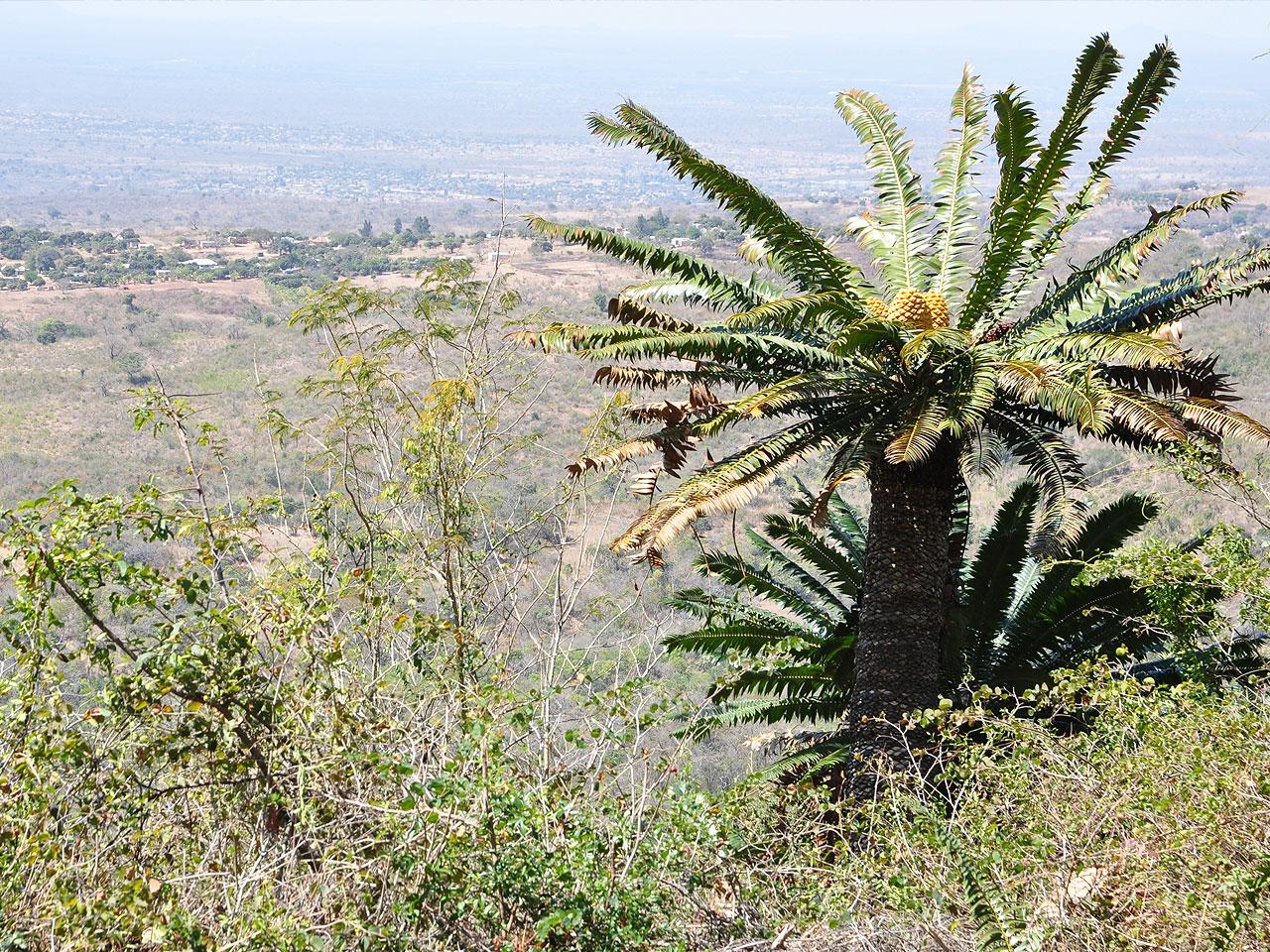 Limpopo inline image 5e43b9a9b1401