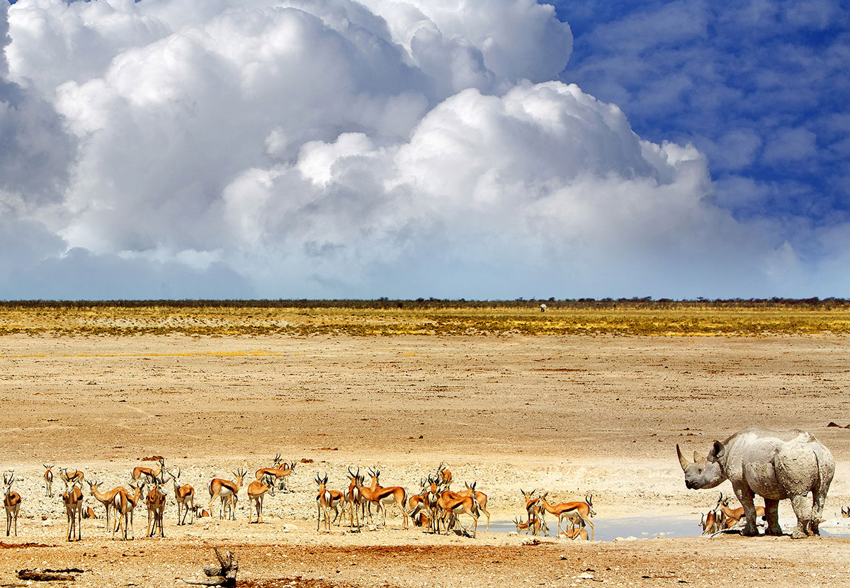 The 10 Best Places to Visit in Namibia inline image 601c320eb6bad