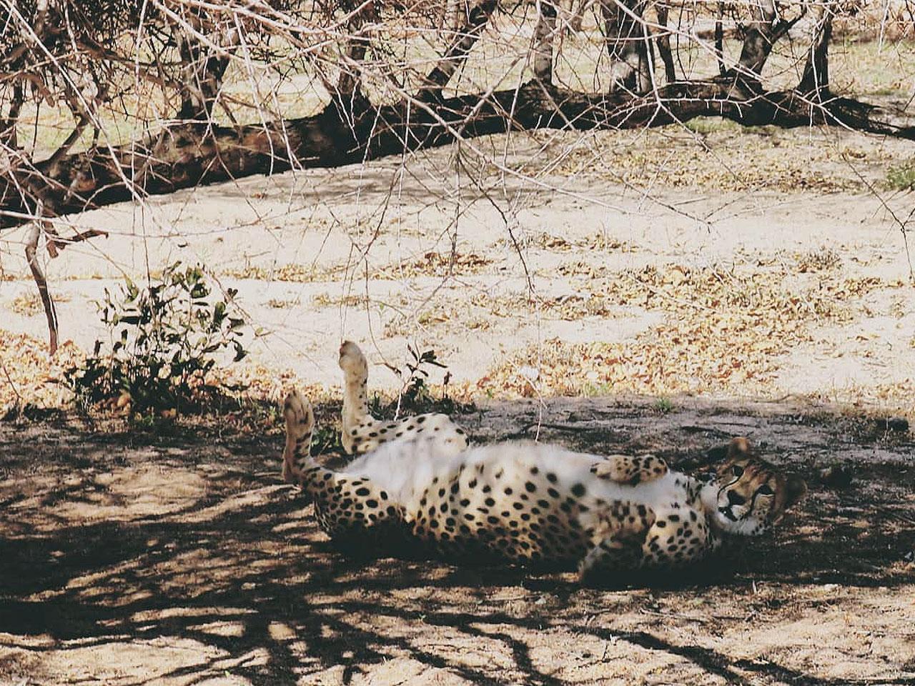 Limpopo inline image 5e43b922d4d06