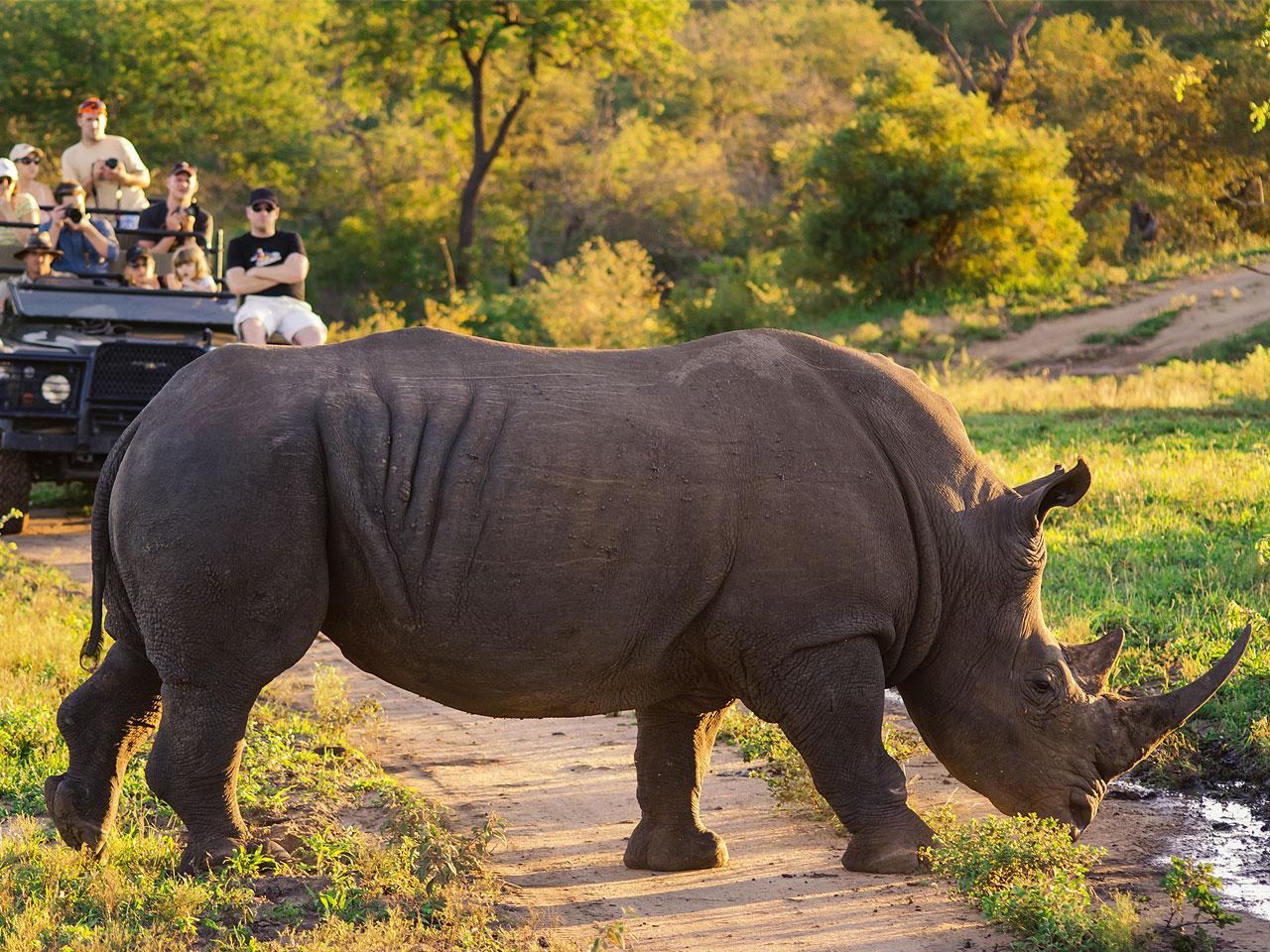Limpopo inline image 5e43ba8a0d1b8