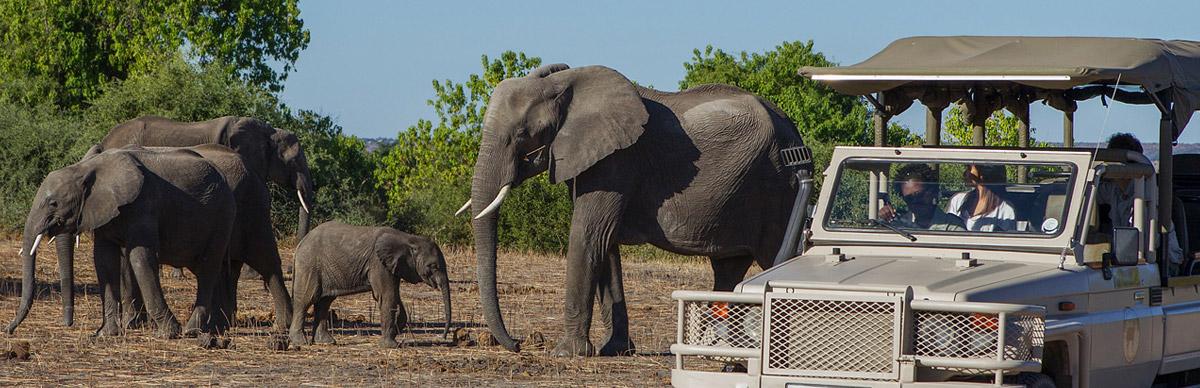 Best Value Victoria Falls and Botswana Safari