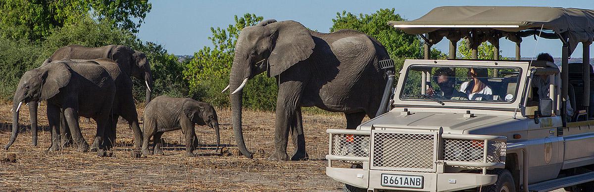 Namibia, Chobe and Victoria Falls Safari