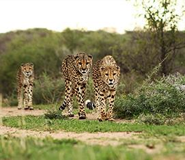 Namibia Highlights Photographic Safari