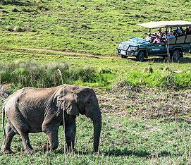 Safari, Garden Route and Cape Town