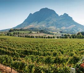 Winelands & Cape Town Self-drive Tour