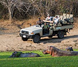 Zambia Highlights Safari