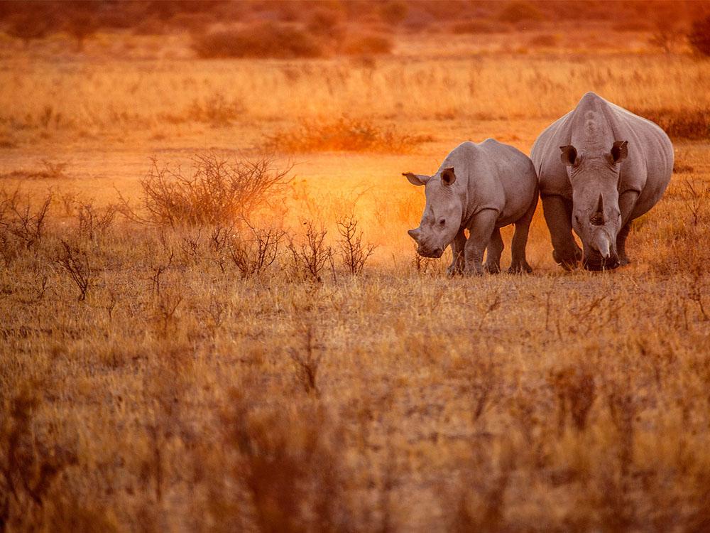 Classic Namibia Safari