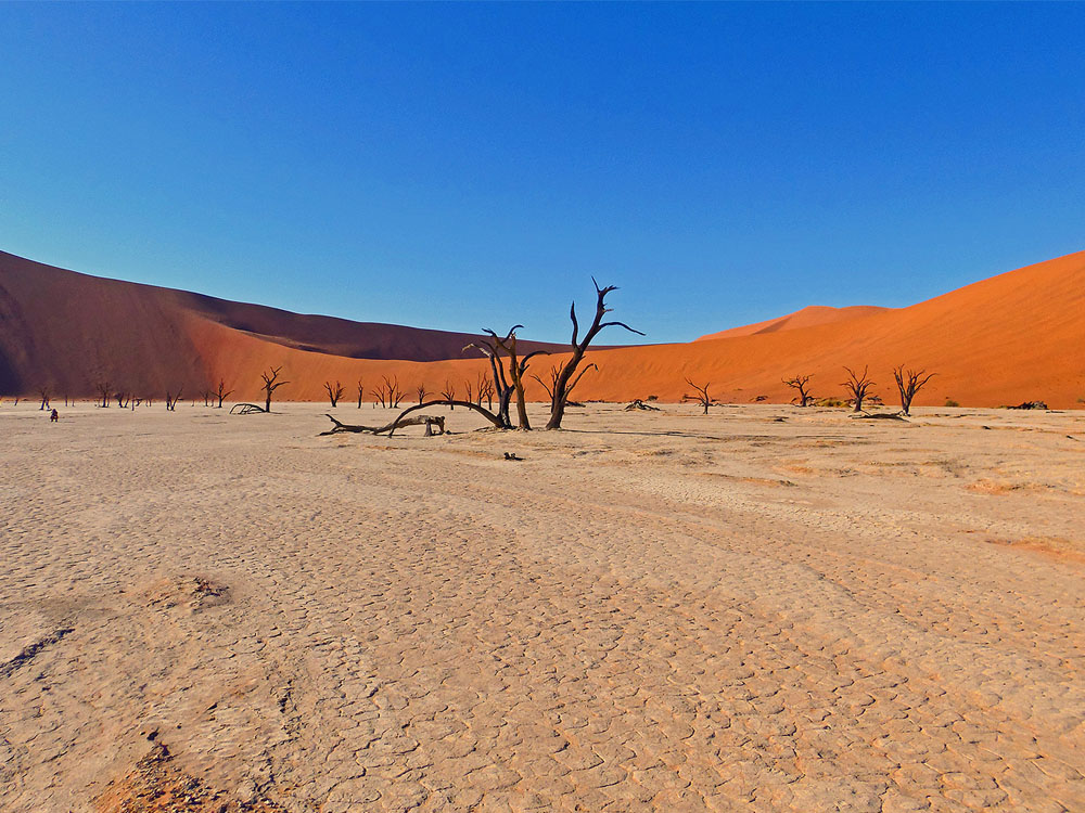 The white cracked pan with the famous dead trees in Dead Vlei and the towering red sand dunes in the background.