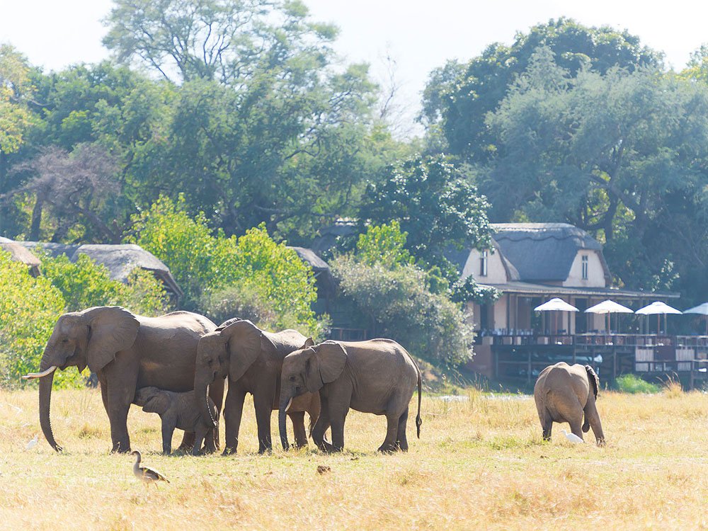 Elephants on a grass plain in front of a lodge.